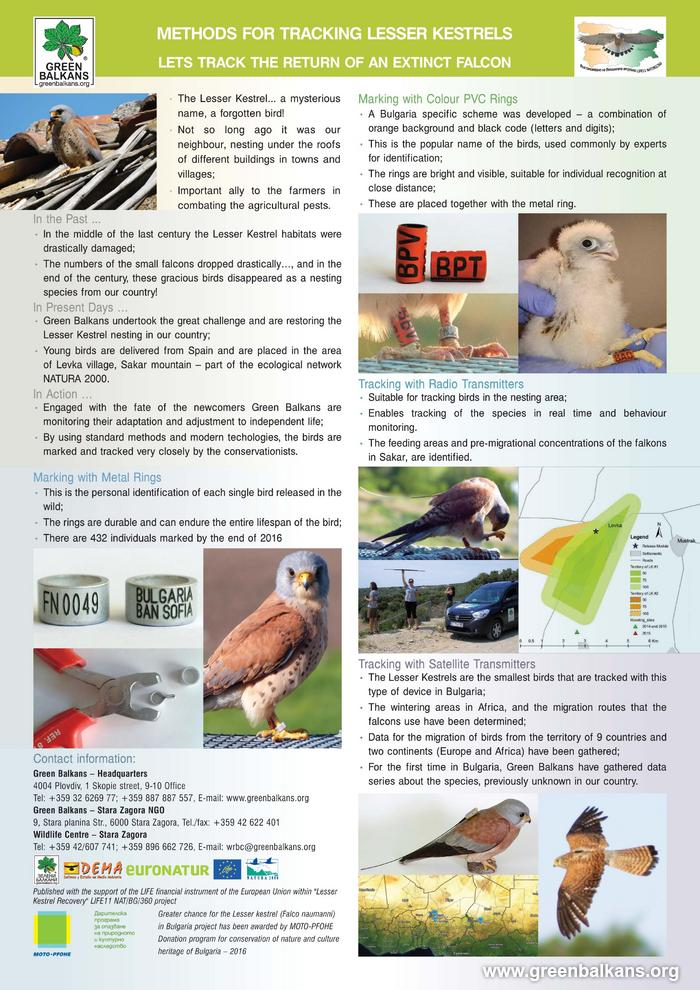 Results - Printed materials - Greater chance for Lesser Kestrel (Falco naumanni) in Bulgaria - Lesser Kestrel Recovery